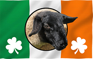 Irish Suffolk Sheep Logo